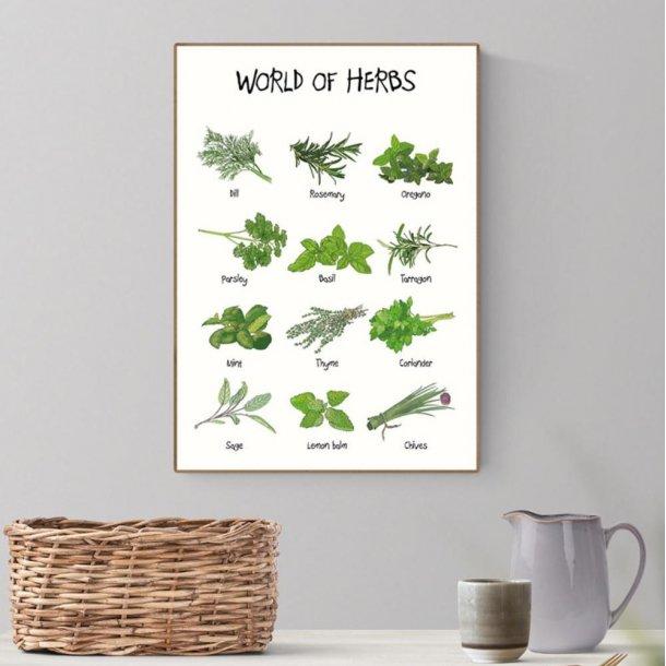 Plakat A3 - World of Herbs